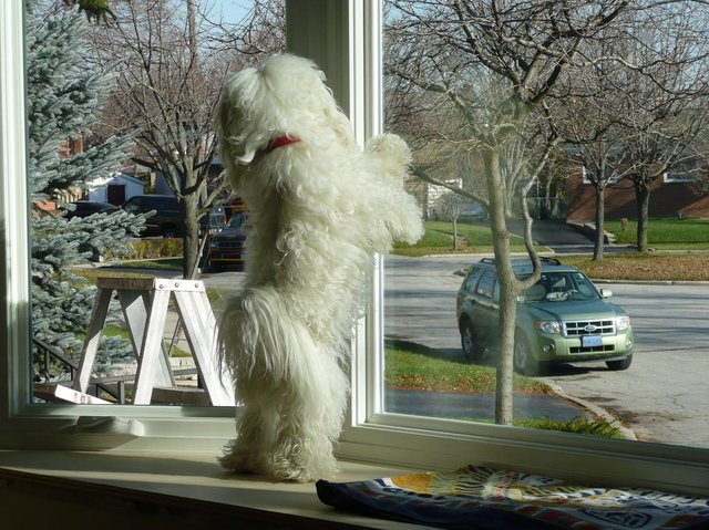 Photo of Kaypo looking out the new bay window